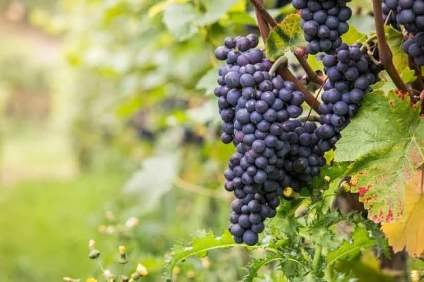 wine-980218_640_e