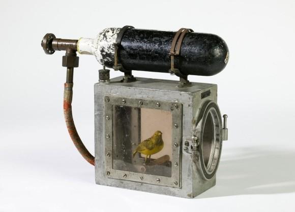 かつてカナリアは毒ガス検知器として使用されていた