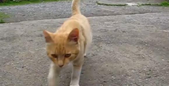 必見!これが猫界の当たり屋の手口である。