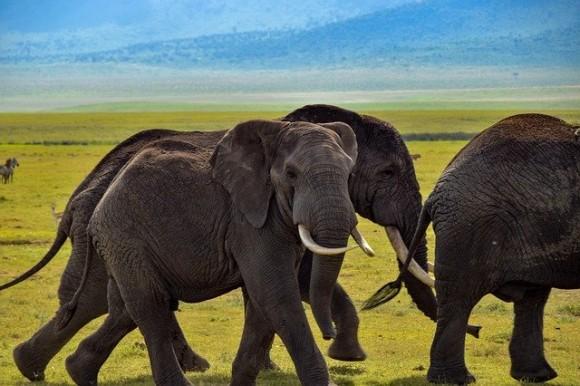 宇宙から象を正確に数えることに成功