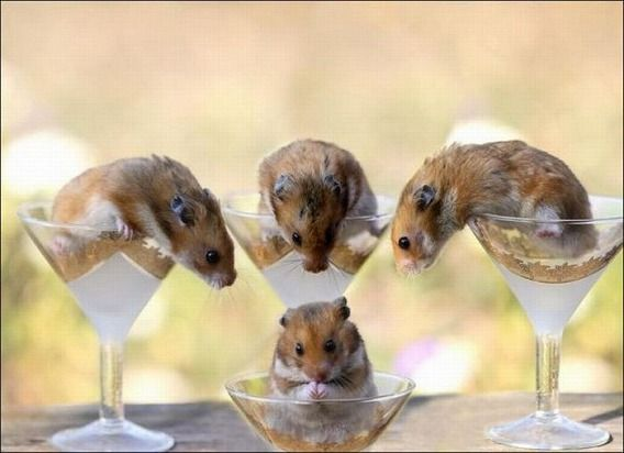 hamsters_14
