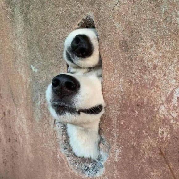 日常で出会った犬たちの写真をシェア