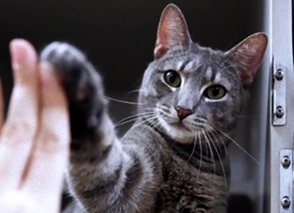 猫だってお手くらいはできるんです!猫にハイファイブを教えて養子縁組をしやすくする取り組み(アメリカ)