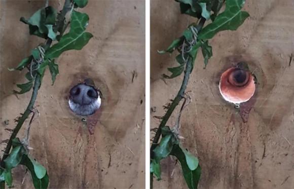 感じる...ただならぬ気配の元をたどったところ、隣に住む犬に塀の穴からのぞかれていた件