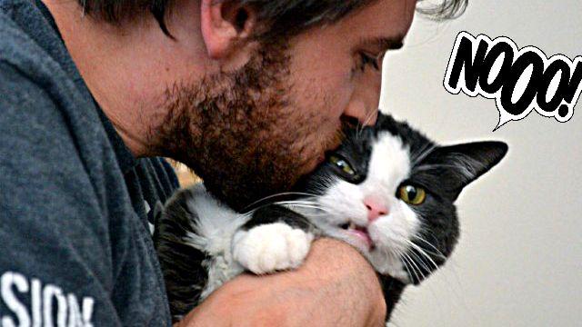 イヤなもんはイヤなんだよ!自撮り嫌いな猫たちのご不満そうな画像詰め合わせ