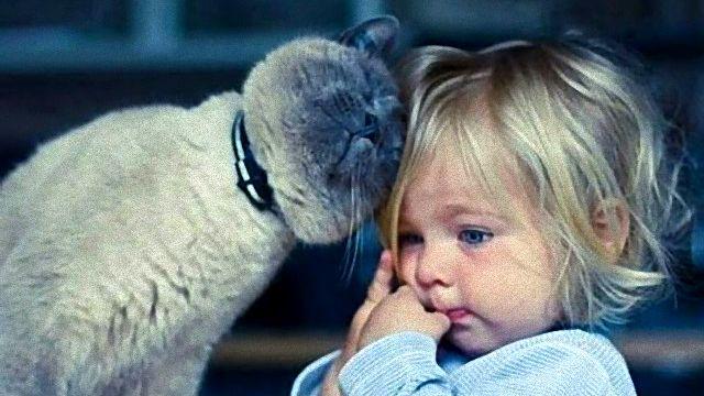 その場所変わってくれまいか。猫がヒトに完全に気を許したときそこは癒し空間に変わる