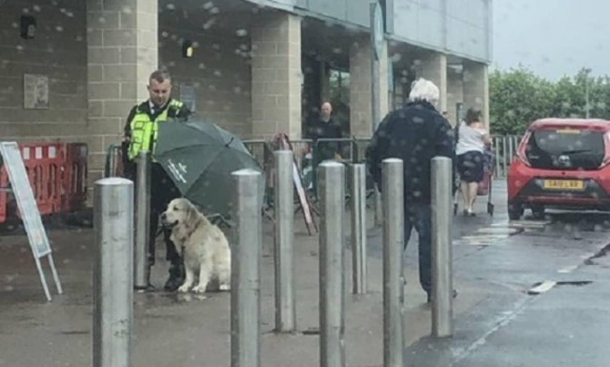 犬が雨に濡れないように