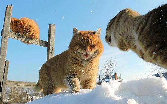 cat11_e