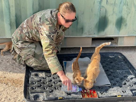 戦地で兵士を癒した3匹の親子野良猫、アメリカへ移送し兵士たちの家族になる計画が進行中