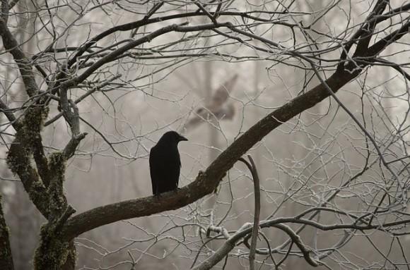 crow-2397589_640_e