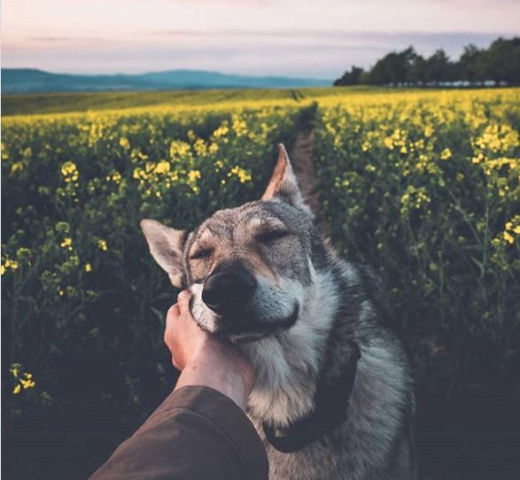 いとしい私の愛犬。ウルフドッグにそっと手を添え、美しい自然の風景を撮影し続けるカメラマン(チェコ)