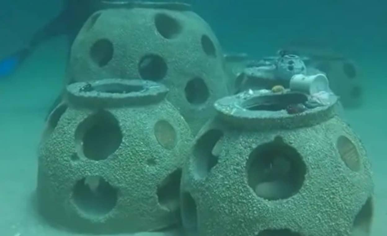 遺灰作った人工魚礁で魚たちの生態系が豊かに