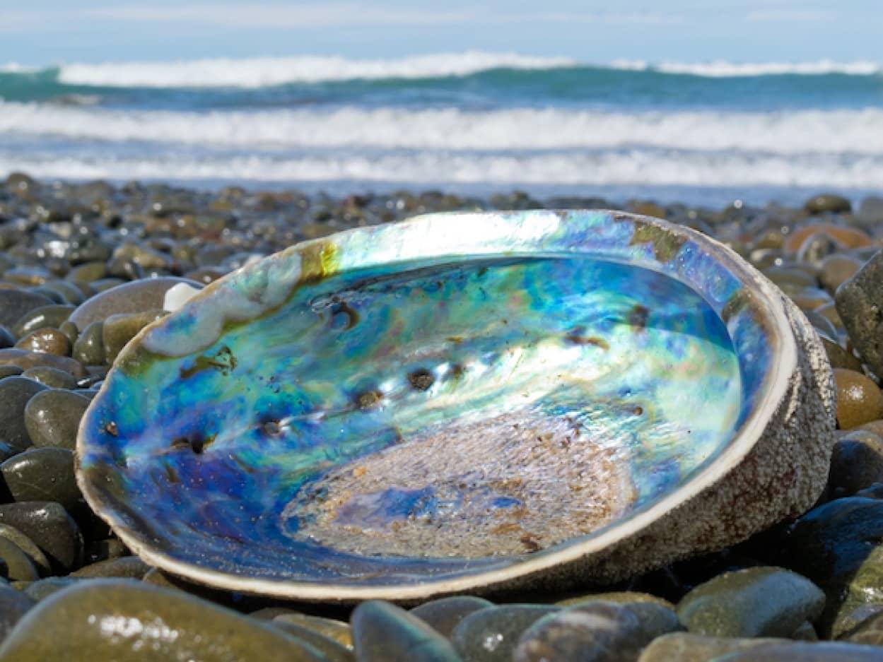 真珠貝から着想を得たスマートフォン用ガラス