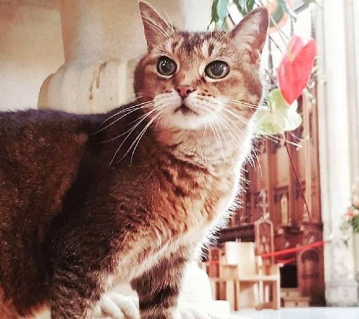 教会の守護聖猫