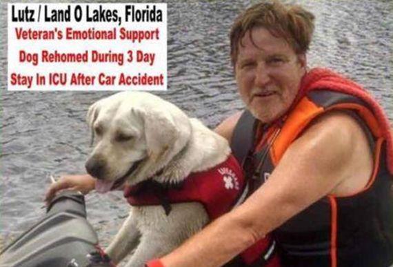 交通事故で入院中、隣人に愛犬(セラピー犬)を預けたはずが、たらい回しにされ行方不明に。ついに感動の再会。