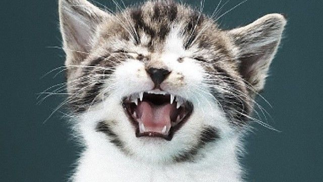 そこには愛があるらしい。謎に満ちた猫のおなじみ愛情表現