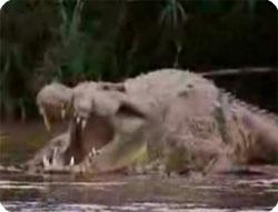 巨大】ギュスターブの生き残り?ウガンダ、体長8mの人喰いワニ ...