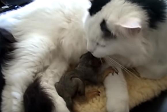 猫の母性は種族を超える。木から落ちたリスの赤ちゃんを2匹とも保護したのは猫!熱心に育児をする(アメリカ)