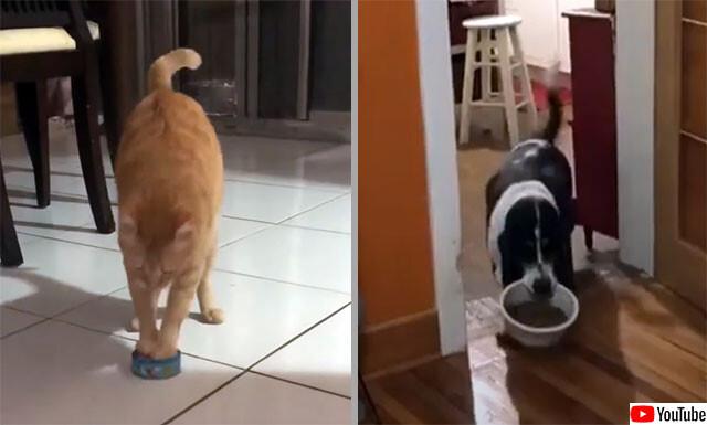 食べ物を運ぶ犬と猫の事情