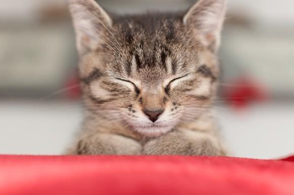 cat-2720778_640_e