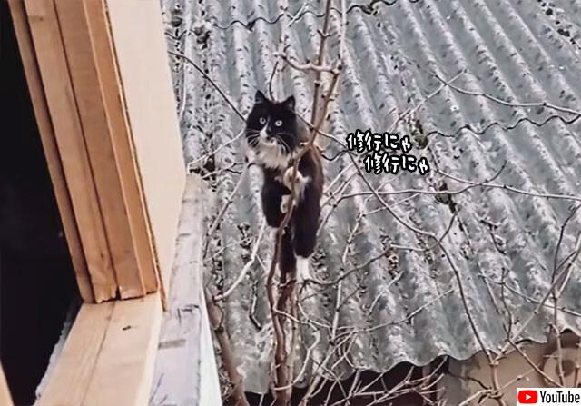 あえて困難な道を選ぶ猫の修行道no title