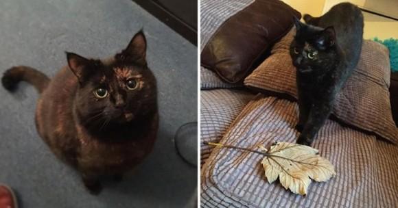 ネズミとかそういうの嫌いっぽかったんで...小動物の代わりに落ち葉を拾い集めて毎朝飼い主に届ける猫