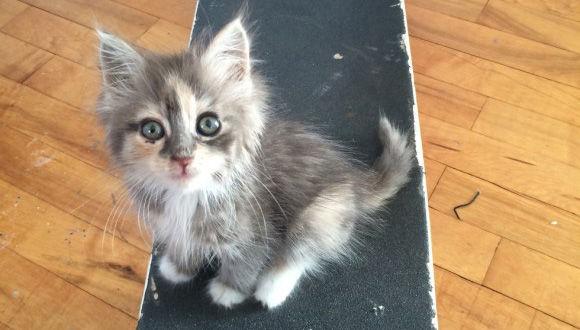 スケートボードをしている男性にすがるような目で近づいてきた子猫、足首をギュっと掴んで離れない。そして一年後・・・