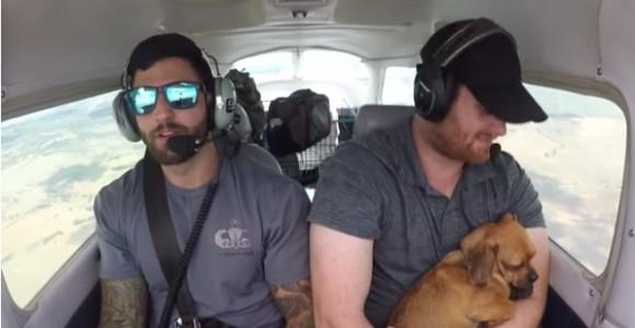 安楽死処分寸前で2人のパイロットに救助され、アリゾナからアラバマまで飛んだ23匹の犬たち(アメリカ)