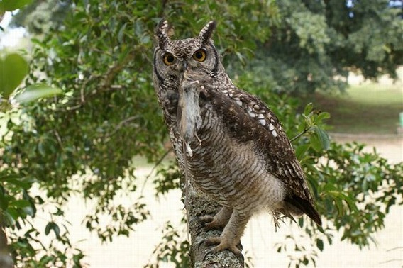 caring_owl_19