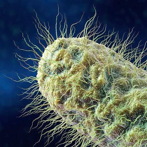 Microscop-Bacteria6