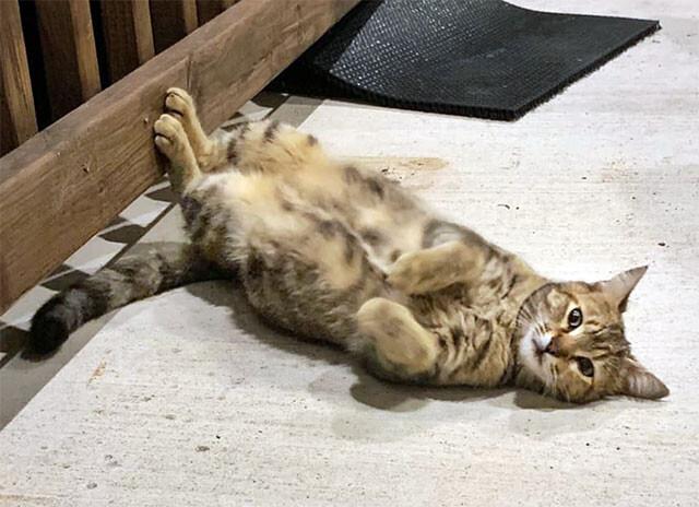 愛猫を亡くしたカップルの元にふらりと現れた野良猫、とんでもないサプライスを運んできた(アメリカ)
