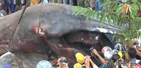 地中から掘り出された体調10メートルをゆうに超えるこの生き物はいったい?(ベトナム)(ベトナム)