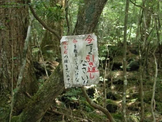 Aokigahara 青木ヶ原 Jukai