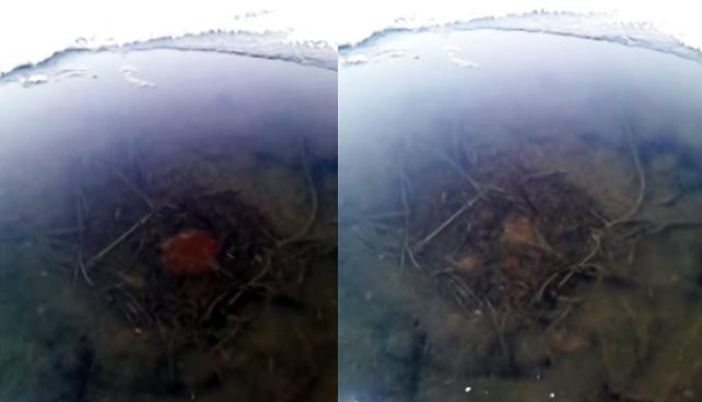 ドクンドクンと大きくなったり小さくなったりしながら氷の池の中をうごめくこの赤い物体は何?