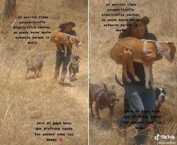 歩けなくなった犬の脚代わりとなり、抱きながら毎日散歩させる飼い主