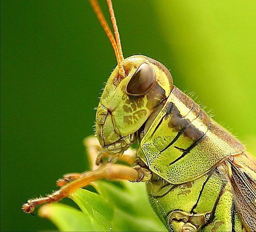 alien_insects_09