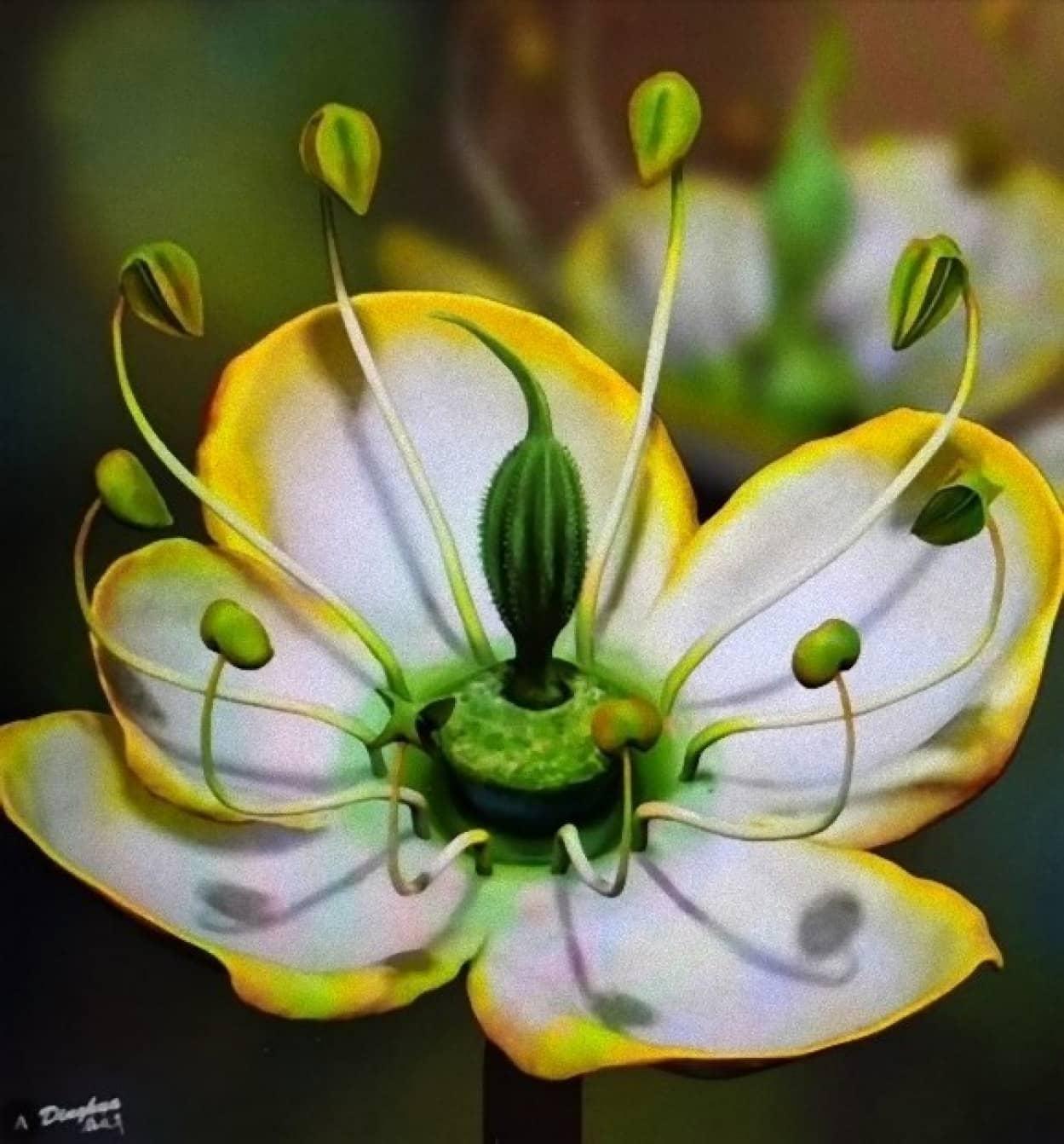 1500万年前の花を琥珀の中から発見