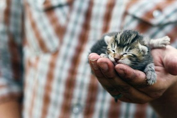 the_smallest_pets_640_12