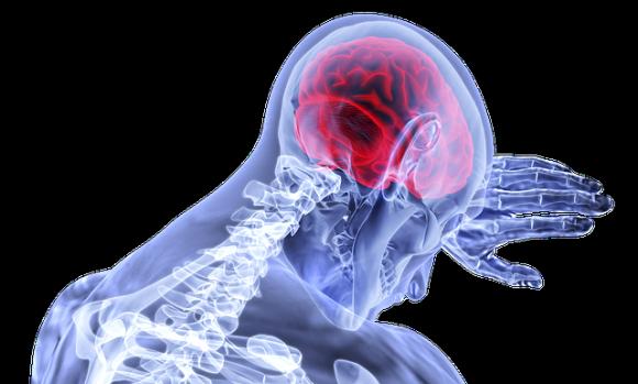 脳の前頭前皮質の領域が大きい人ほど、ストレスから身を守れるよう楽観的な考え方ができるという研究結果(米研究)