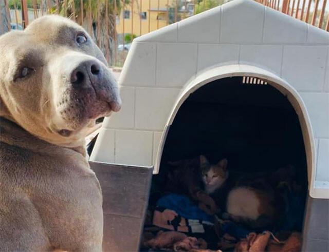 ボクの犬小屋使っていいよ。野良の母猫の出産を助け、友情を育んだ犬(メキシコ)