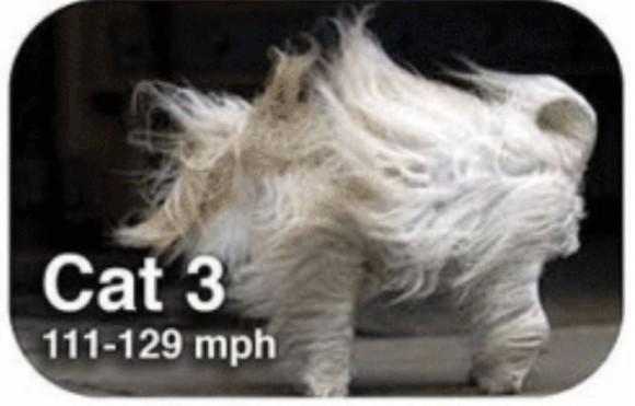 ハリケーンの強さを猫で表現してみた。5つのカテゴリーを5つのニャテゴリーで。