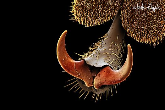 coleopterus-claw-57280sig