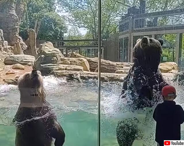 動物園のクマたちが来園者に波乗りダンスを披露