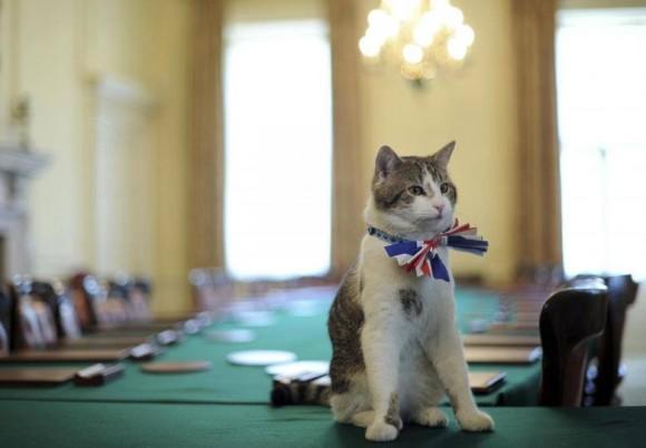 フランスでも官邸に猫2匹をネズ...