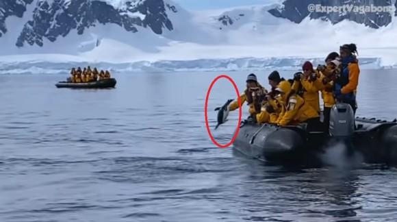 シャチに追われていたペンギン、人間のボートに逃げ込み危機を脱する(南極)