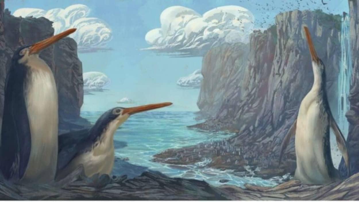 これまでに知られていない脚の長い巨大なペンギンの化石が発見される。これまでに知られていない