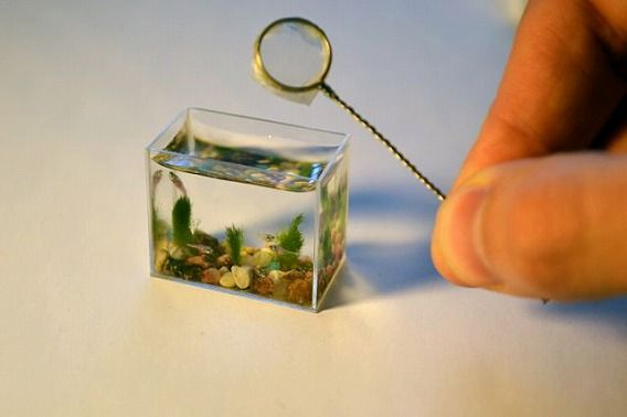 the_worlds_smallest_640_01