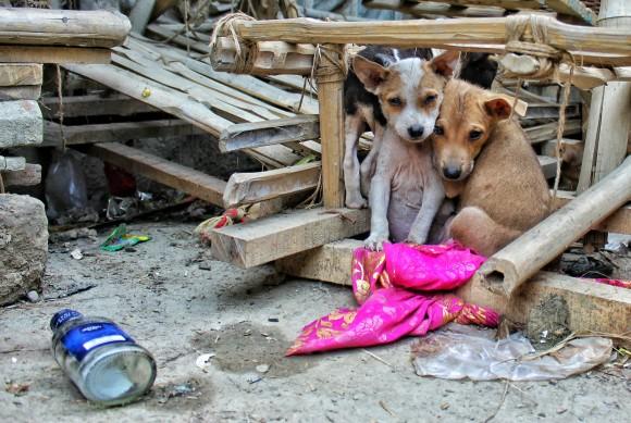 27年にわたり数万匹の野良犬や猫を救い続けてきた僧侶(中国)