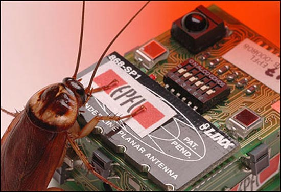robo-cockroach