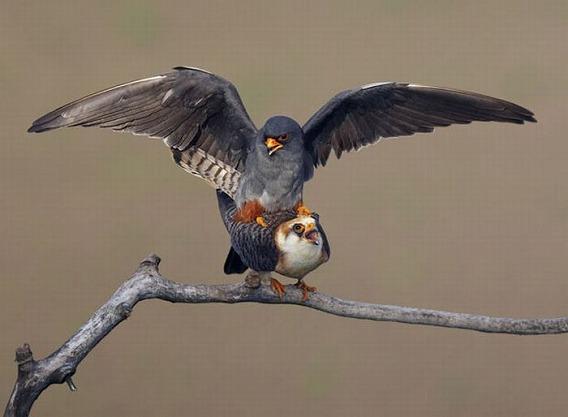 beautiful_photographs_of_birds_08